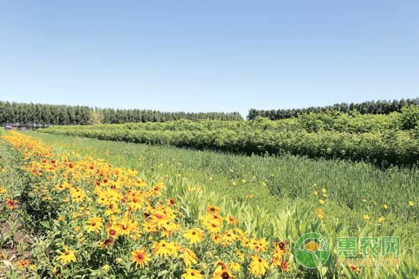 种植苗木创业致富事迹