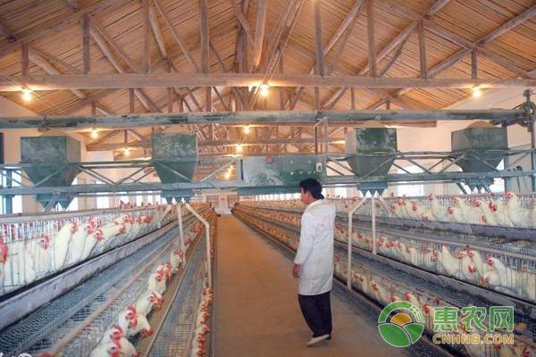 大中小养鸡户前景分析