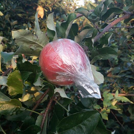 山東省臨沂市沂南縣美八蘋果