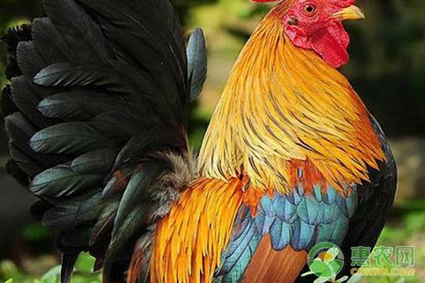 农村很少养殖的这5种动物 未来农村创业首选