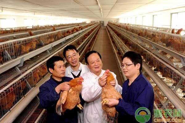 养鸡场新城疫病毒防治之打疫苗