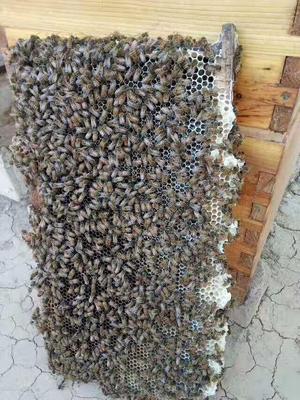 上海闸北区蜂胶