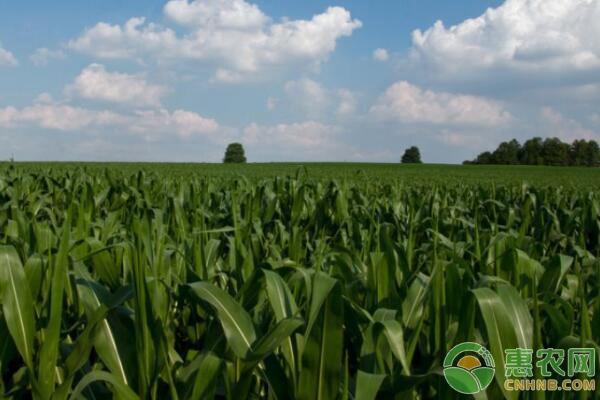 粮改饲青贮玉米补贴