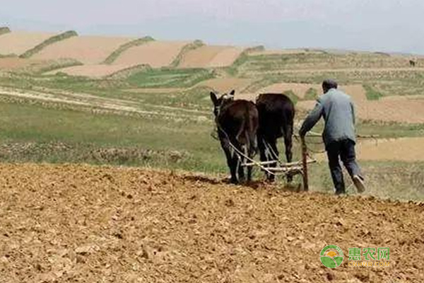 农业补贴6月已经下发每亩补贴500~800元,你领到了吗?