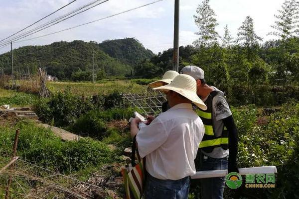 农民朋友们注意了:土地确权后,这类承包户拿不到农业补贴了!