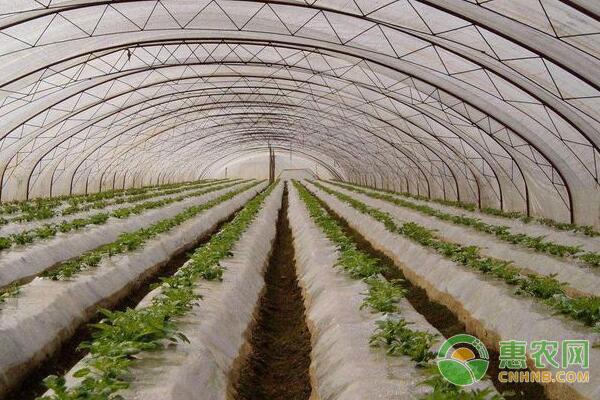 蔬菜种植技术:遮阳网使用要适度