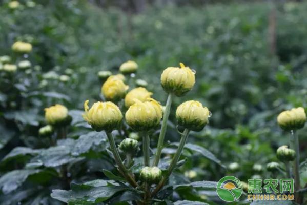 经济收入主要来源于传统的农业种植