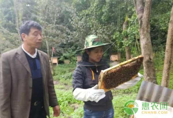 龙亭镇发展产业助村民脱贫致富