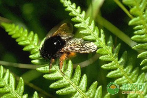 使用熊蜂授粉在种植前的注意事项
