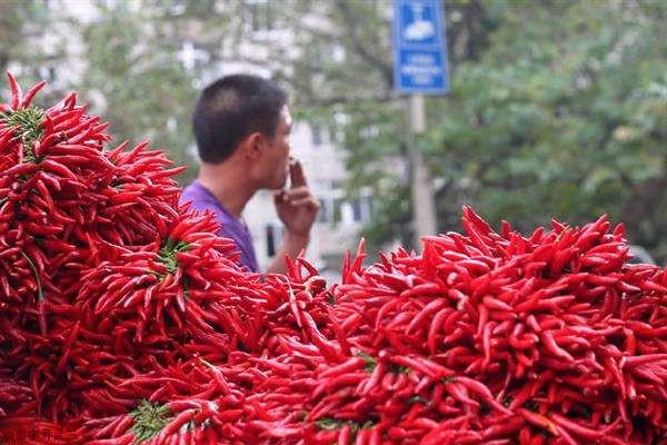 农民林大爷种这些辣椒,三亩卖了四万多元