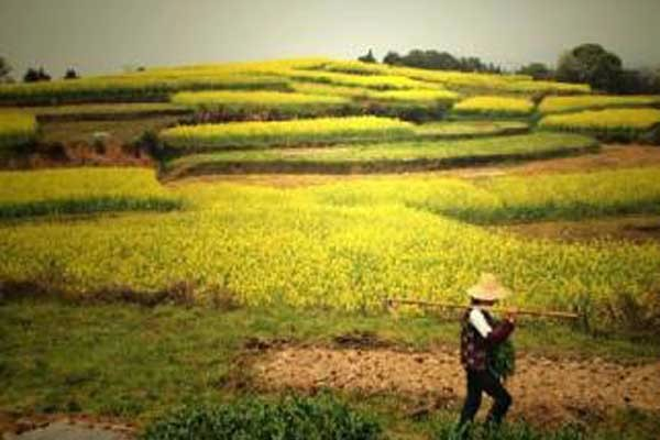 土地升值后农民还能申请到地吗?
