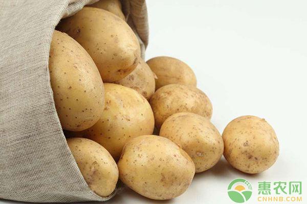 土豆价格行情