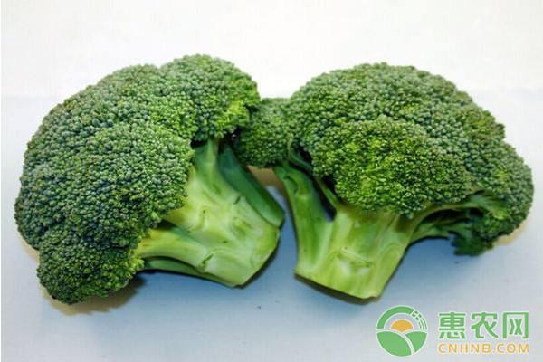立冬后可以种什么蔬菜?立冬后的蔬菜种植指南