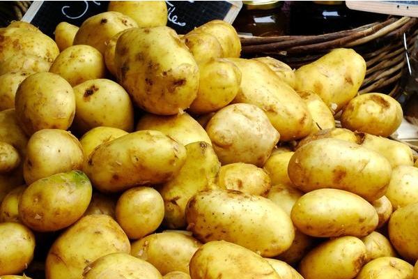 2017年11月21日全国土豆价格行情汇总
