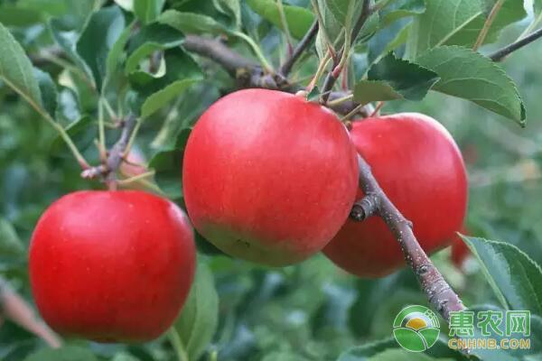 什么时候栽植果树成活率高?果树栽植季节选择