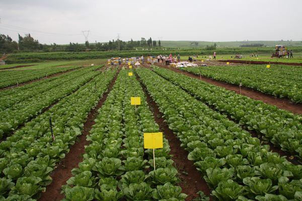 国家推出这三项农民生活补贴,各家各户都能领