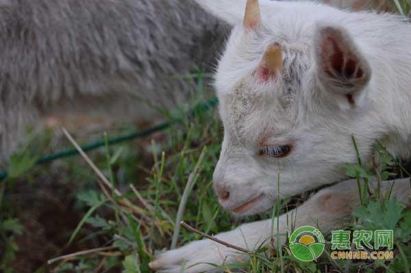 羊肉多少钱一斤?11月30日羊肉价格行情