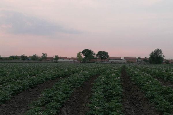 昔日养猪大户转型卖土豆,入驻龙8国际官网网页版网2月销售80万