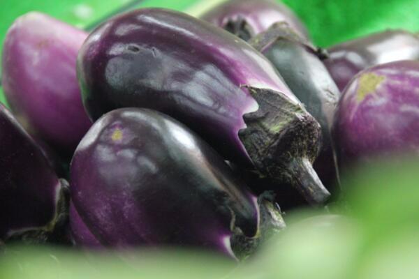 12月2日茄子主产区收购价格行情:青茄尾期价格看涨