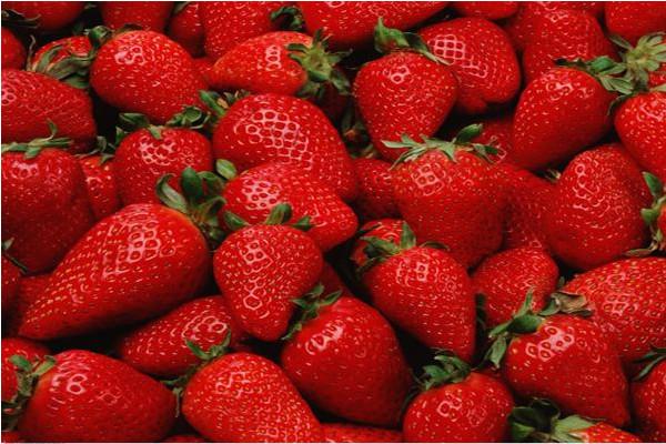 设施大棚草莓有机生态型无土栽培技术