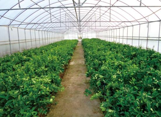 大棚蔬菜的抗冻防病措施