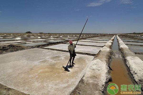 农盐的作用