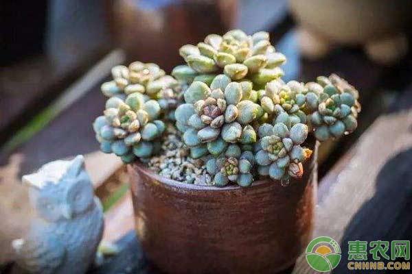 孟津县高沟村引入特色种植项目