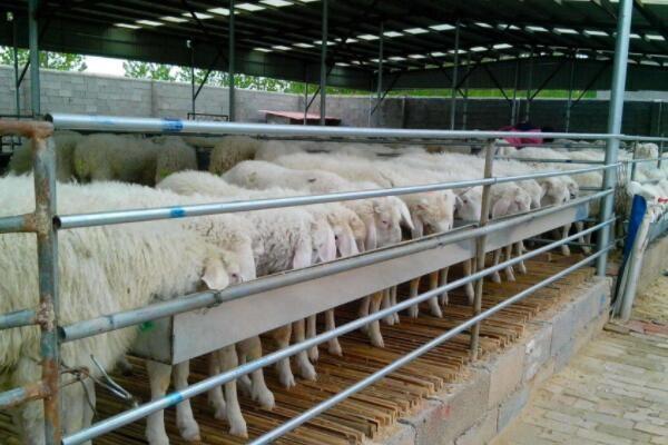 农村养殖户注意:1月起,禁养区养殖将被严重处罚!