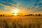 2018年农业政策有哪些大调整?与你相关的可不少!