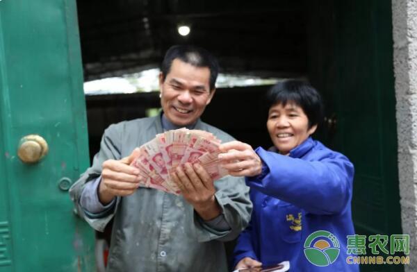 覃志贵夫妇数着刚卖猪的赚得钱