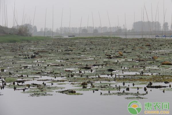 志丹县:特色养殖助力贫困户增收脱贫