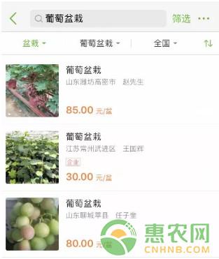 有没有一亩地能赚十几万的农作物?