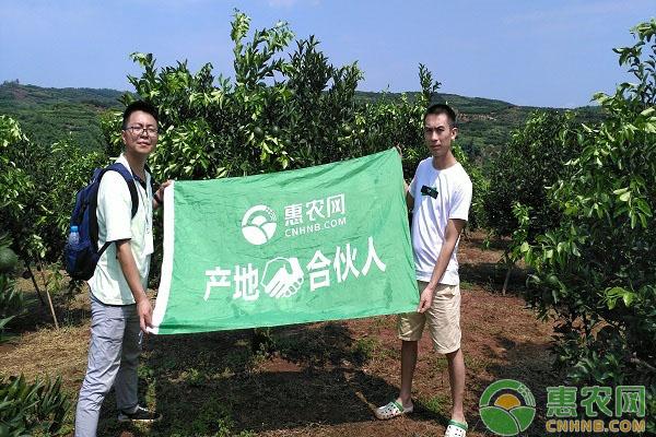 橙好仍需懂推广,看陈家凤在惠农网如何短期网销脐橙100万