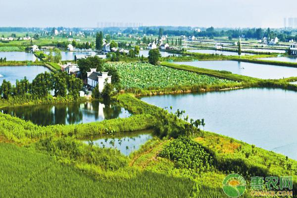 王吉珍:发展绿色生态农业,引领家乡人们走向致富路