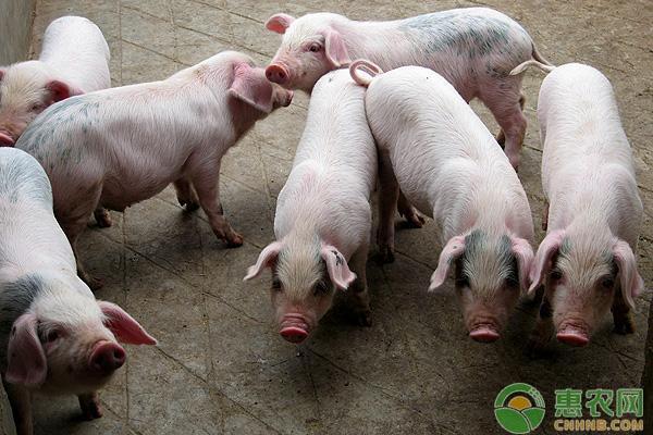 生猪价格行情