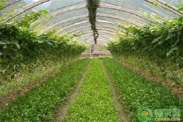 家庭种菜要催芽吗?催芽的方式有哪些?