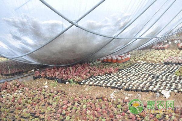 大棚种植的意外危害有哪些?