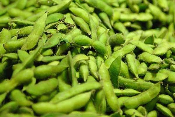 毛豆高效栽培技术