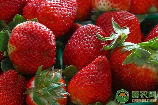 草莓种植利润及前景分析