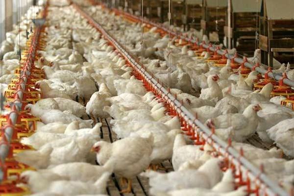 2018年中央一号文件对畜牧养殖行业的影响