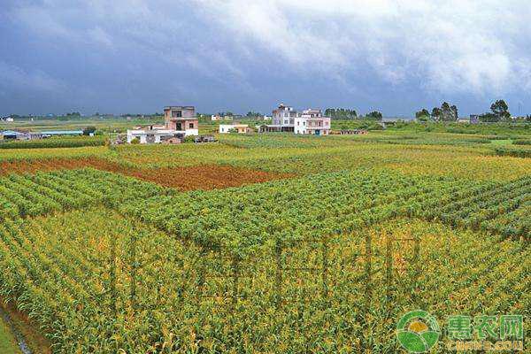 镇平县:金融扶贫有声有色,建设农业助民致富
