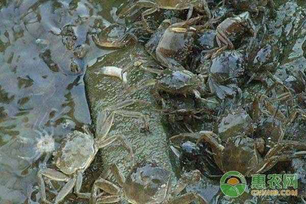 高回报的青虾、河蟹生态混养技术