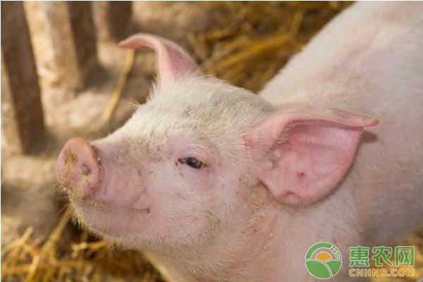 2018年2月11日全国生猪价格走势分析