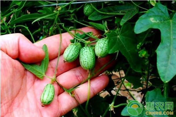 2018年种植什么最赚钱?盘点2018最赚钱的农作物项目!