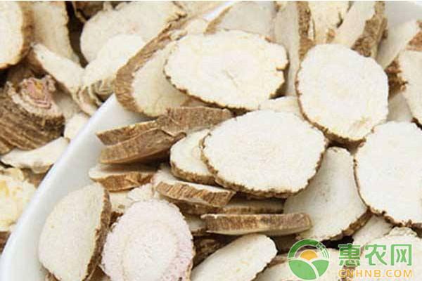 川白芷高效栽培技术及病虫害防治