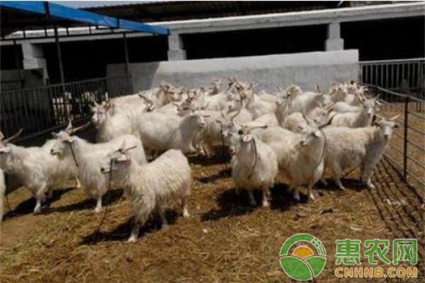 2018年2月12日全国活羊、羊肉最新价格走势