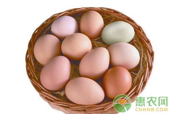 鸡蛋价格为什么这么低?2月12日全国鸡蛋价格最新行情
