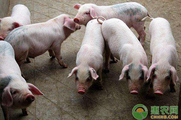 猪价北方回涨,南方跌势展缓