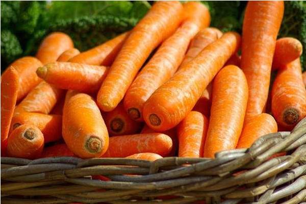 蔬菜种植课堂:蔬菜苗期的管理方案