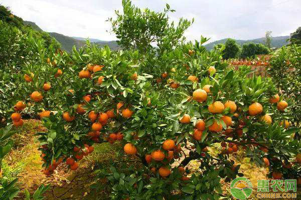 果树春冬季防低温、晚霜冻害果园管理措施